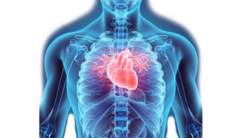 Aromatherapy for Cardiovascular System Support